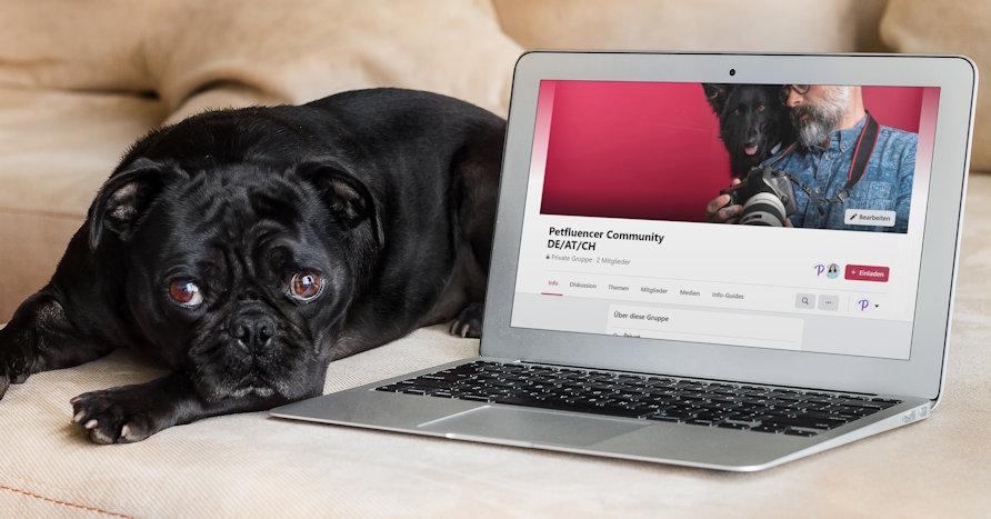 Tausche dich mit anderen Petfluencern (DE/AT/CH) in der Facebook Gruppe aus.