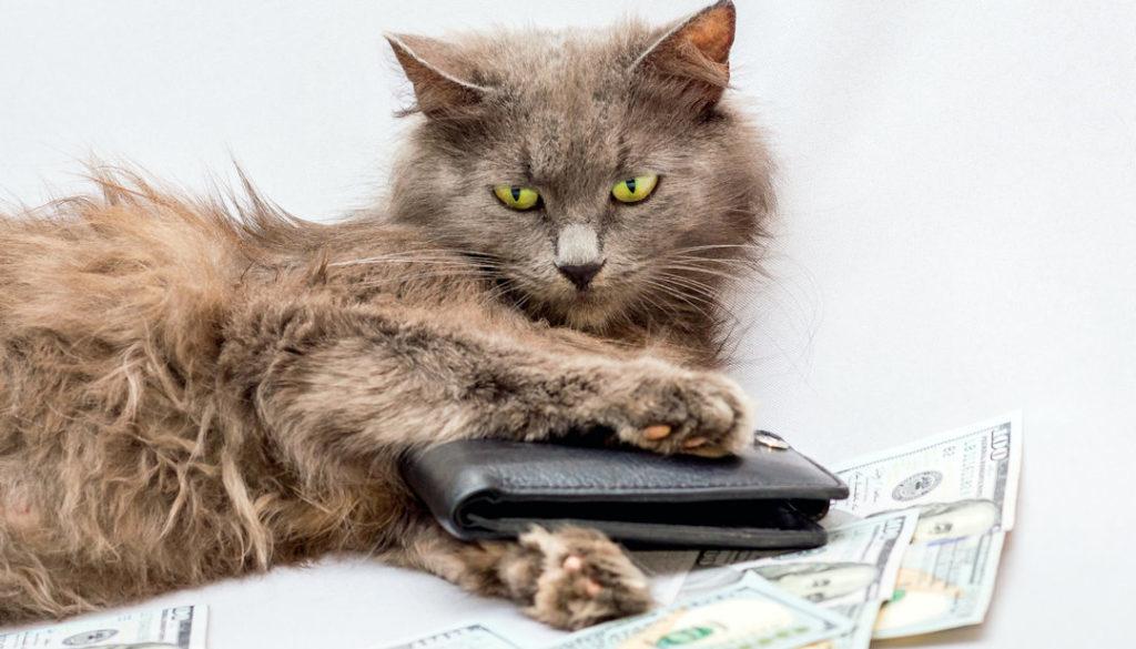 Geld verdienen als Petfluencer