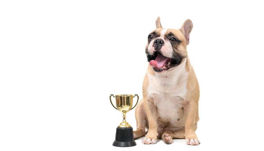 Petfluencer Awards